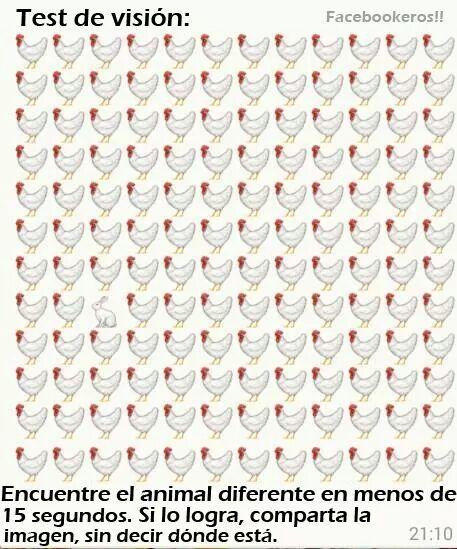 Encontrar el animal diferente - Encontrar el animal diferente