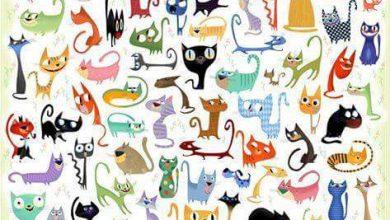 mundo de los gatos 390x220 - Mundo de los gatos
