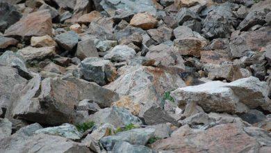perro de las praderas 390x220 - Qué es el animal en la imagen