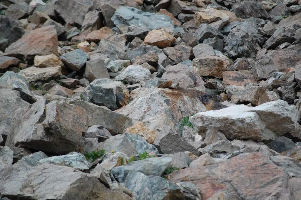 perro de las praderas - Qué es el animal en la imagen