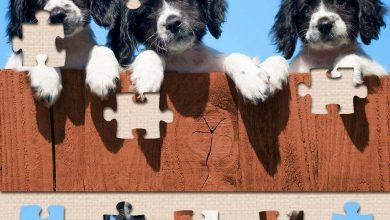 perros lindos 390x220 - Perros lindos rompecabezas