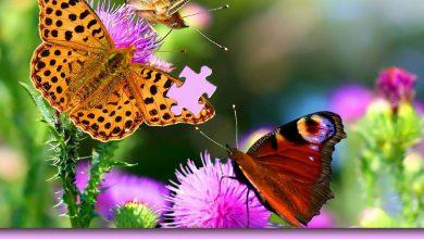 rompecabezas de la mariposa 390x220 - Rompecabezas de la mariposa