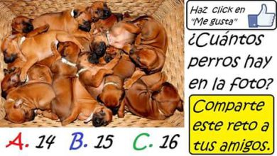 dogs 390x220 - Cuantos cachorros