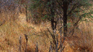 encuentra el animal en la imagen 390x220 - encuentra el animal en la imagen